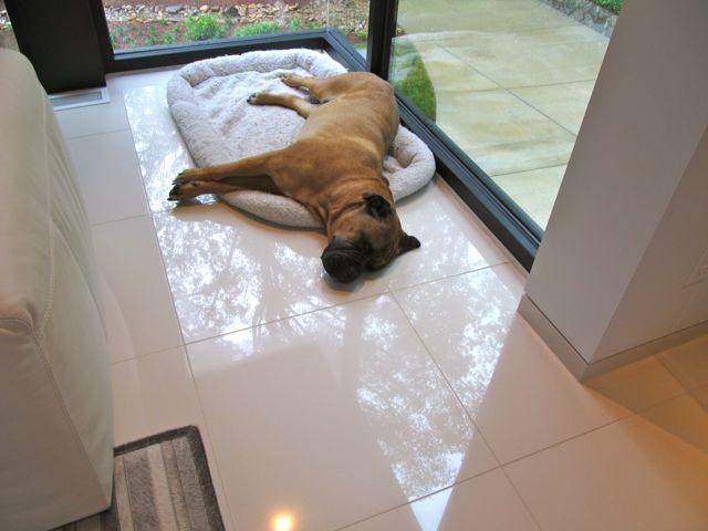 home tour - modern dog sleeps through the tour