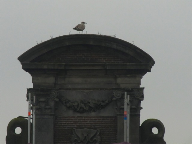 Amsterdam gull - across the street from Our Lord in the Attic